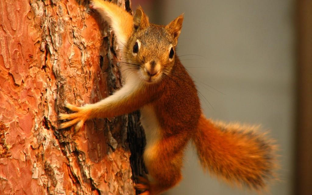 Squirrel-on-tree